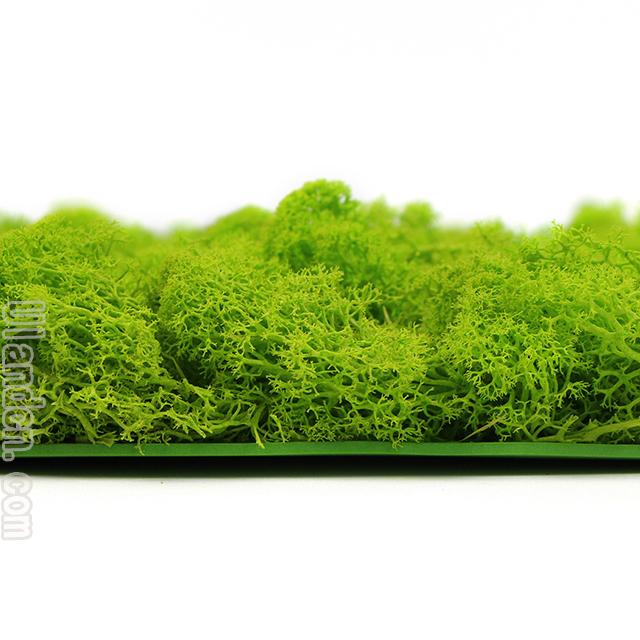 永生苔藓品牌-优兰德