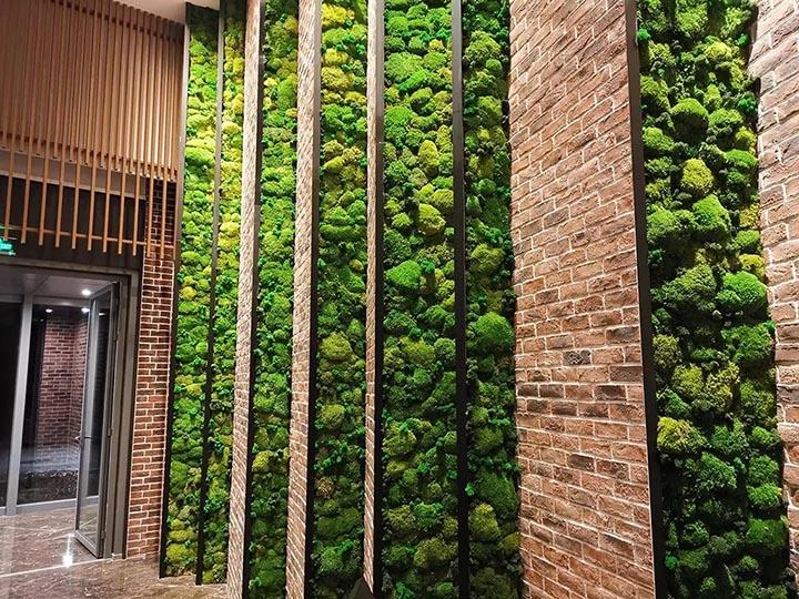 苔藓植物墙效果图