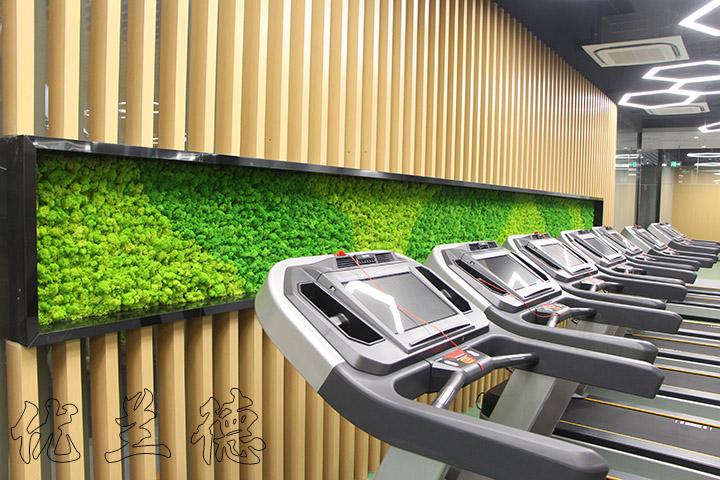 永生苔藓装饰的健身房